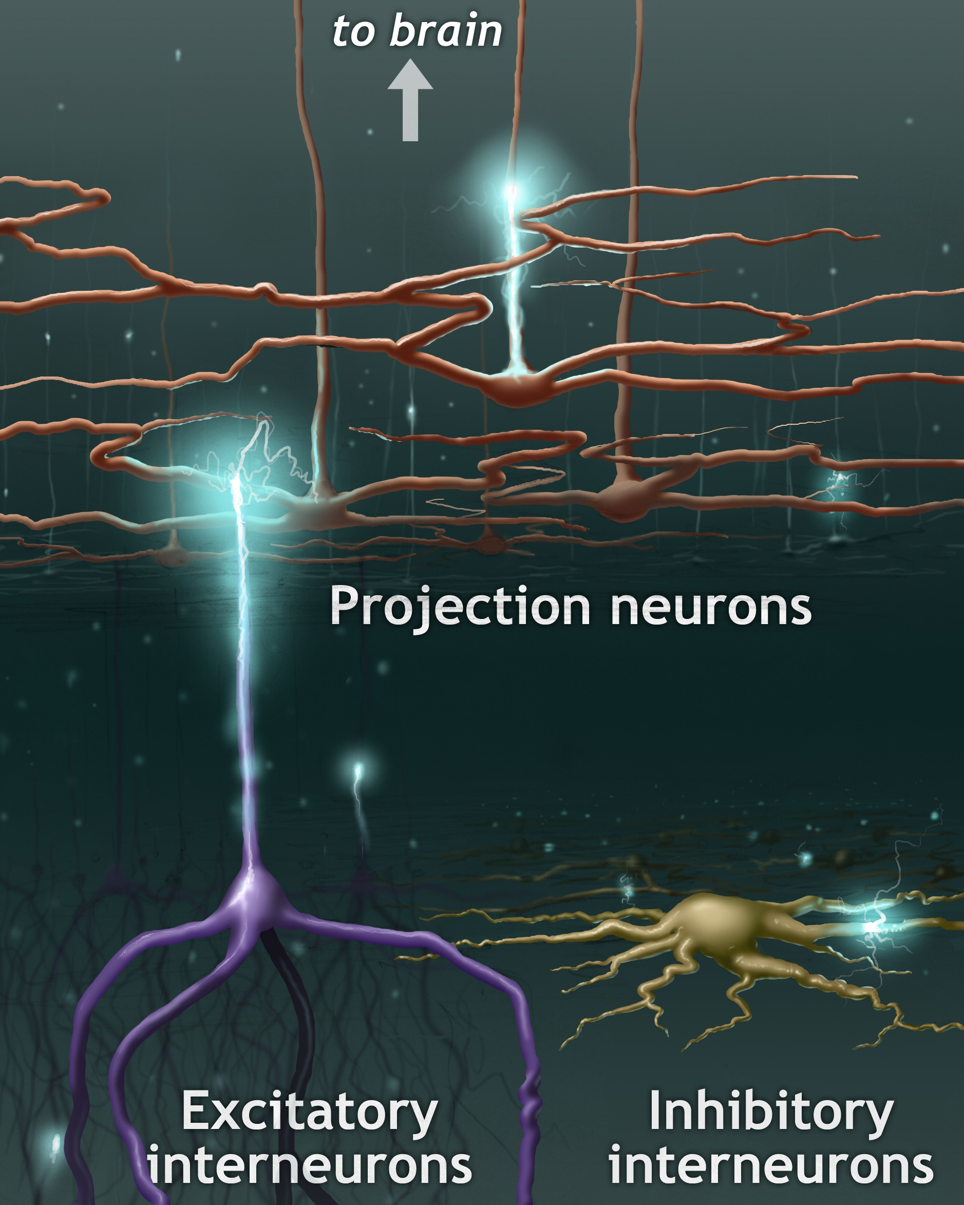 Illustration of neurons and the brain