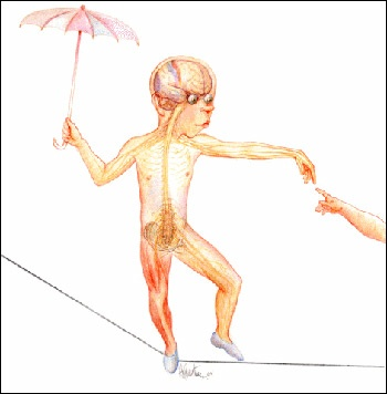 Bartner's drawing of a teenage boy walking a tightrope shows how the body's sensory organs work together with bones and muscle to maintain balance, keeping the boy from falling off the rope.