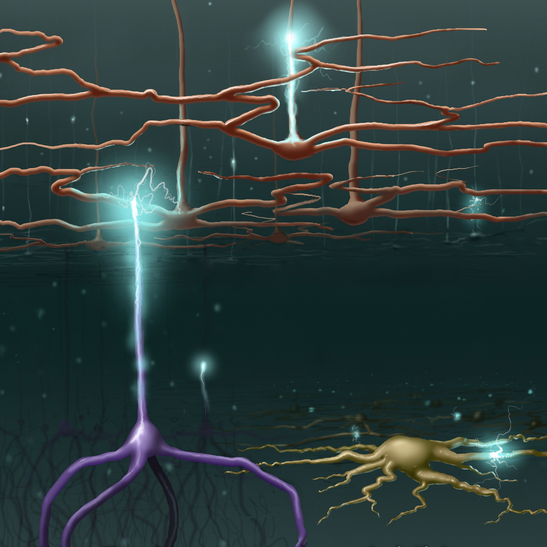 image depicting 3 types of neuron