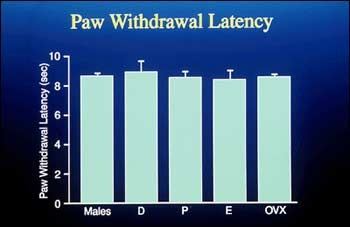 Paw Withdrawal Latency